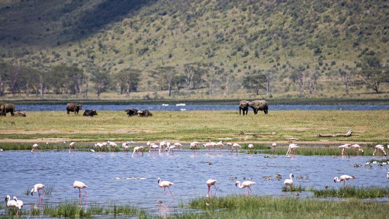 Lake-Nakuru-Nationalpark bietet einmalige Naturschauspiele © Diamir