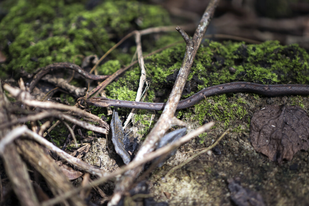 Schlange im Nam Cat Tien Nationalpark