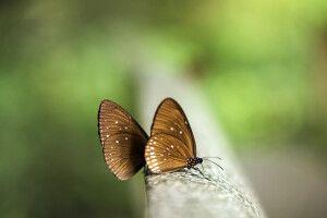 Schmetterling im Nam Cat Tien Nationalpark