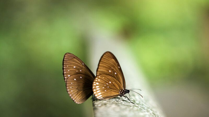 Schmetterling im Nam Cat Tien Nationalpark © Diamir