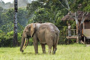 Tierrischer Gast im Mboko Camp,