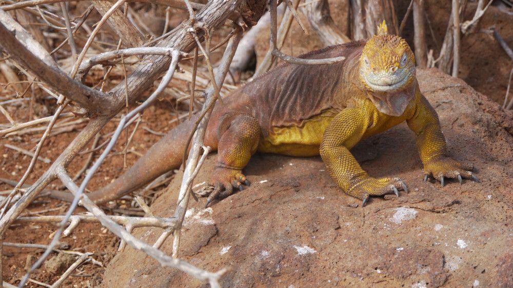 Galapagos Landechse