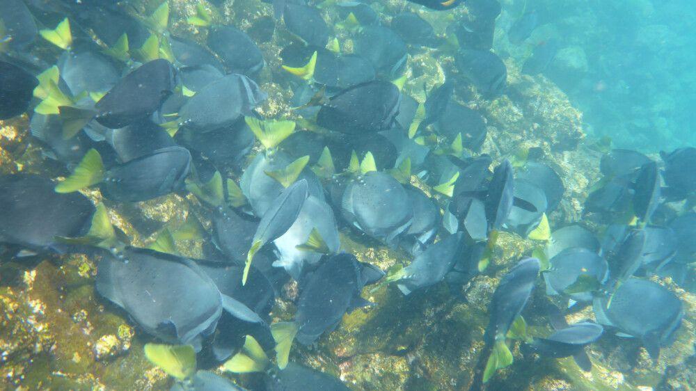 Erlebnis pur beim Schnorcheln auf den Galapagosinseln