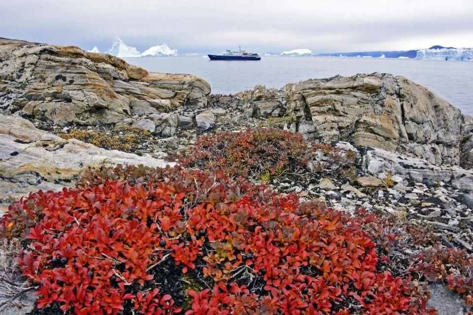Farbenfrohe Laubfärbung der Tundra im Herbst