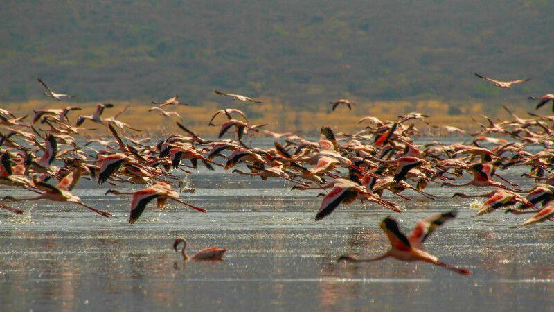 Flamingos © Diamir