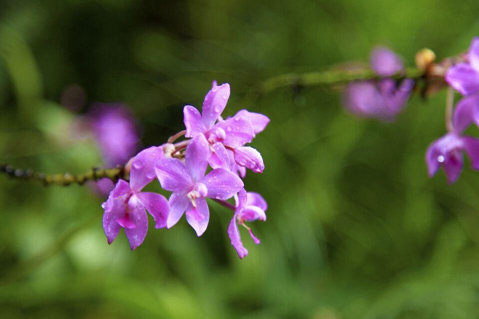 Blütenzauber der Orchideen