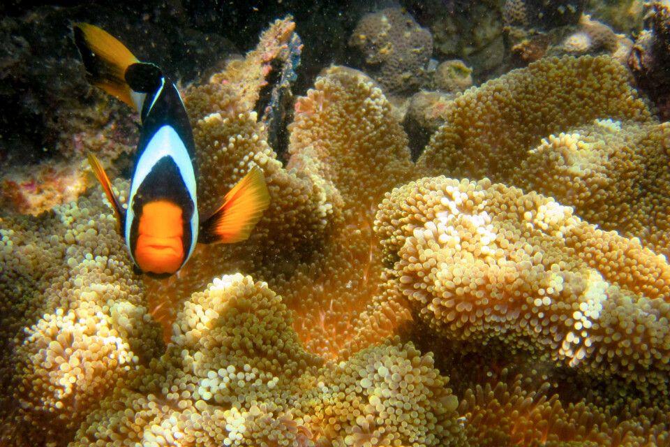 Faszinierende Unterrwasserwelt