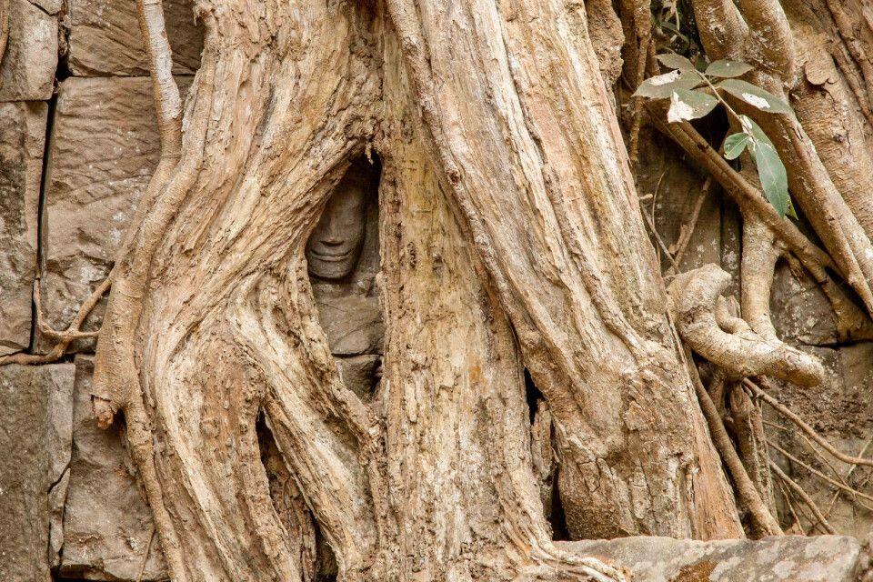 Ein von einer Würgefeige überwuchertes Buddha-Abbild