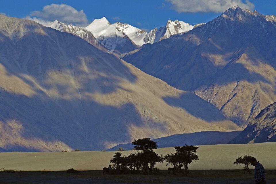 Ladakh Nubra Valley Sanddünen von Diskrit