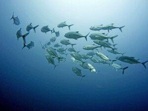 Malediven - ein Traum für Taucher