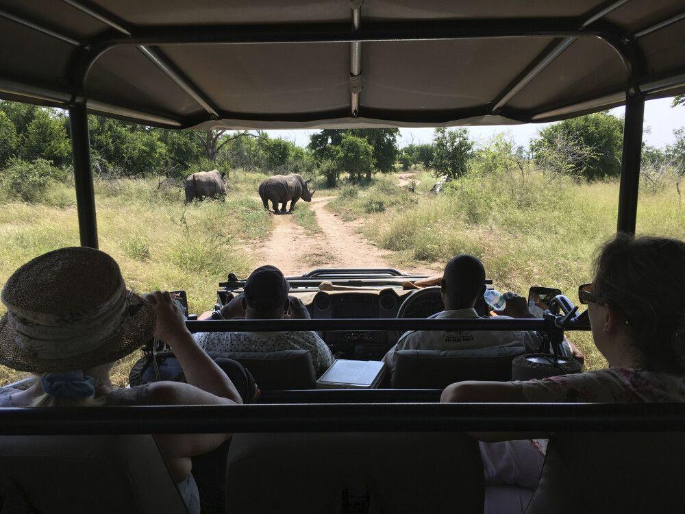 Nashörner im Hlane-Nationalpark, Eswatini
