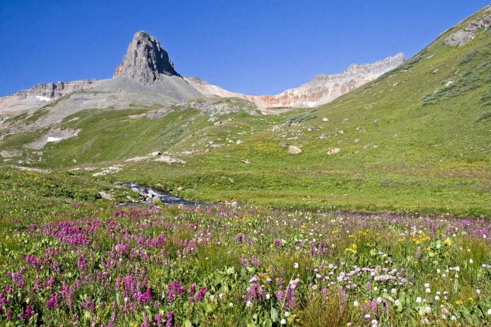 Wildblumenwiese, San Juan Mountains, Colorado