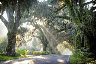 Avenue of the Oaks, Floral City, nahe Crystal River, Florida