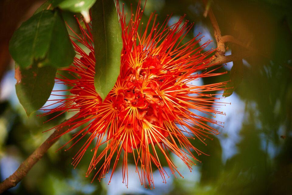 Exotische Pflanzenwelt