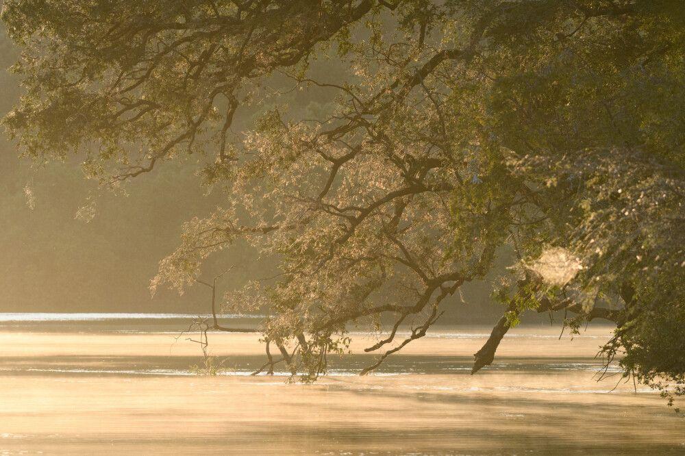 Morgenstimmung am Chobe-Fluss