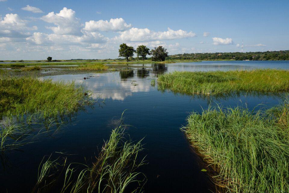 Land unter: typische Szene am Chobe-Fluss