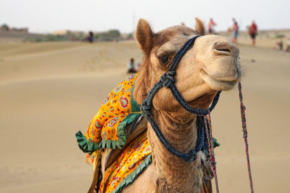 Jaisalmer Wüste Thar
