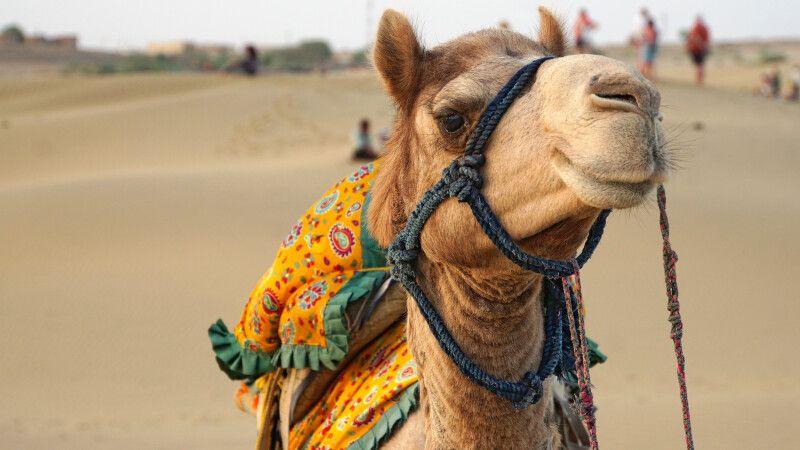 Jaisalmer Wüste Thar © Diamir