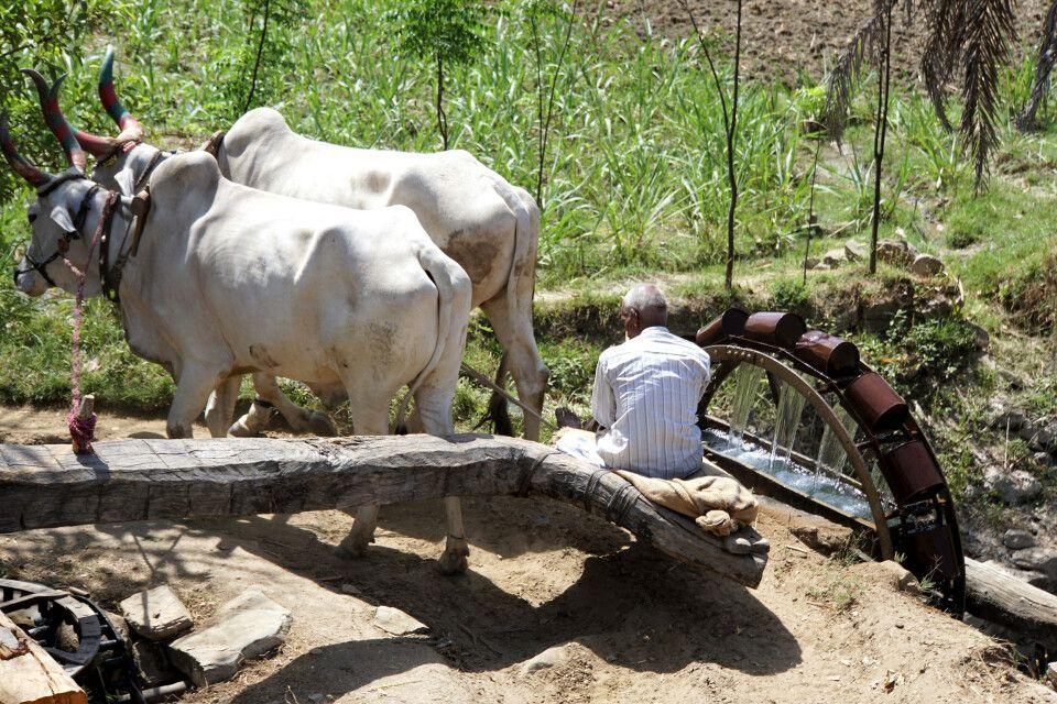 Ranakpur Feldbewässerungsanlage