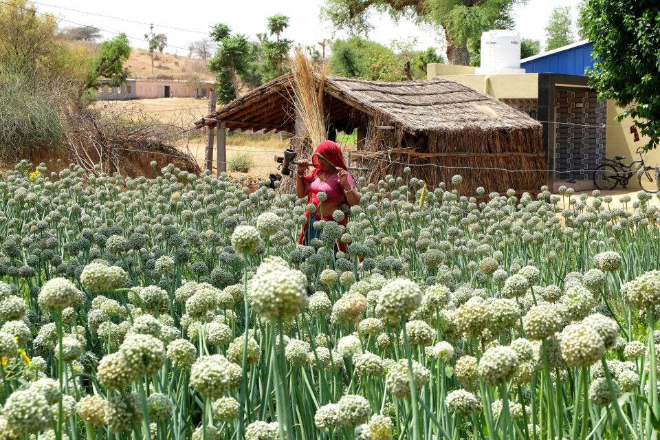 Landschaft bei Nawalgarh, Rajasthan