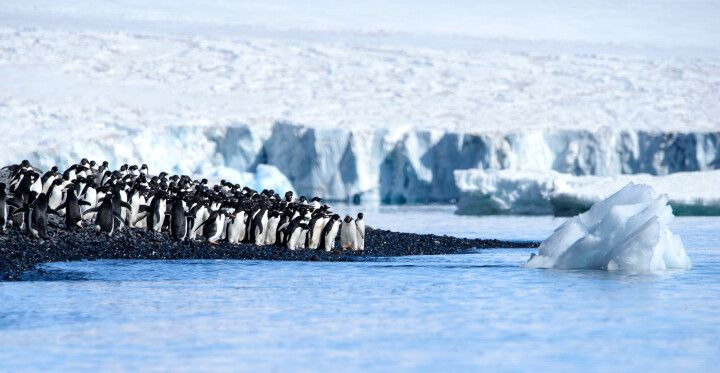 Pinguine, Brown Bluff, Antarktische Halbinsel