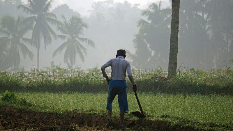 Reisbauer im Morgengrauen © Diamir