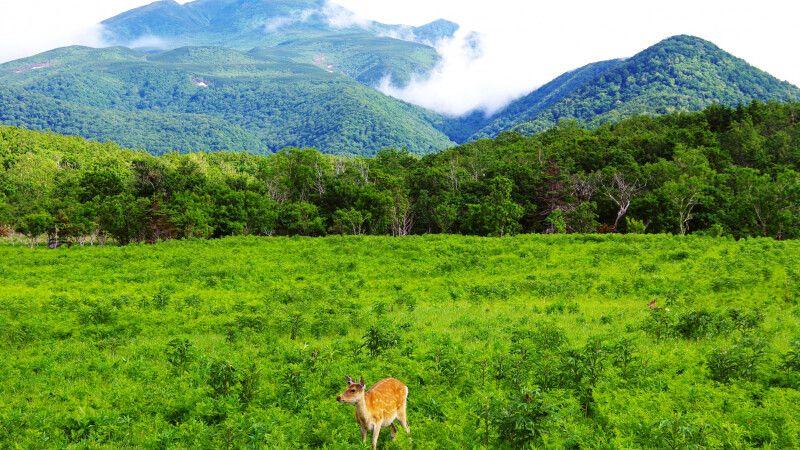 traumhafte Landschaft auf Hokkaido © Diamir