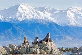 Pelzrobben an der Küste von Kaikoura, Canterbury, Neuseeland