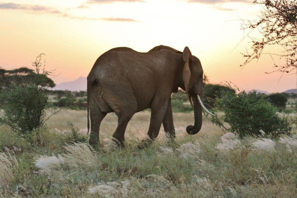 Sonnenaufgang im Samburu