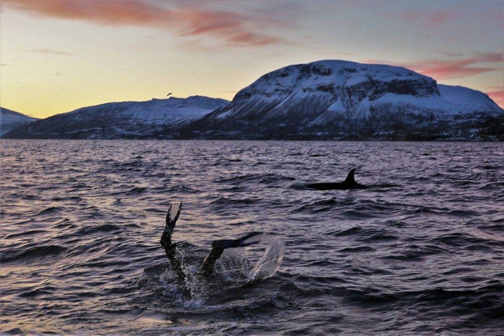 Tauchen mit Walen