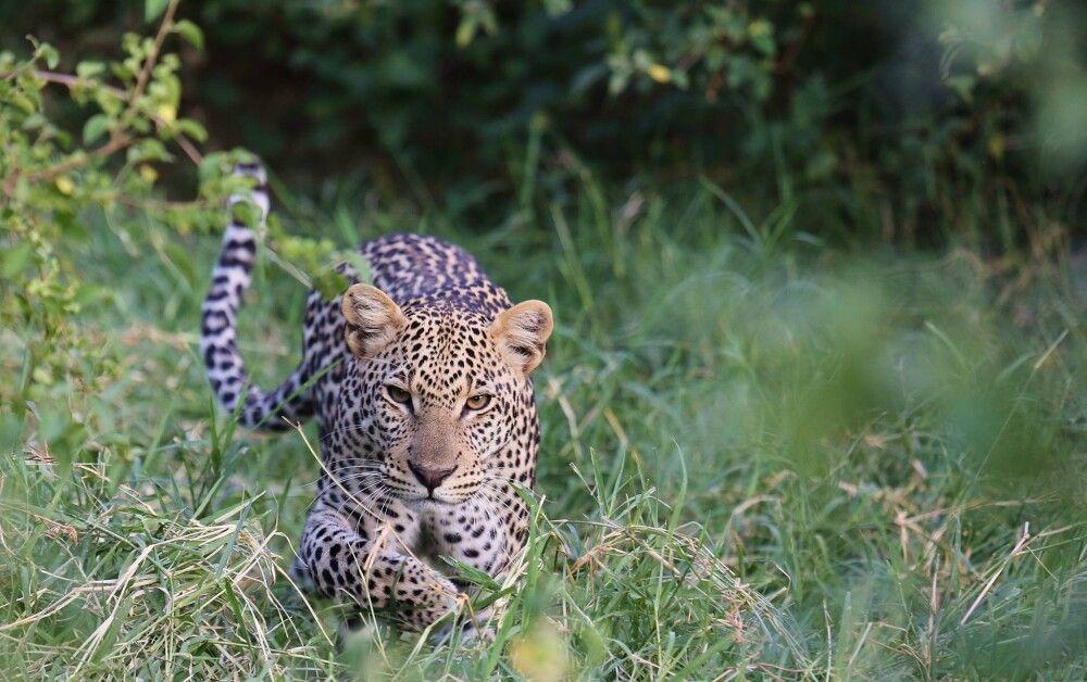 Im Samburu National Reserve – Auge in Auge