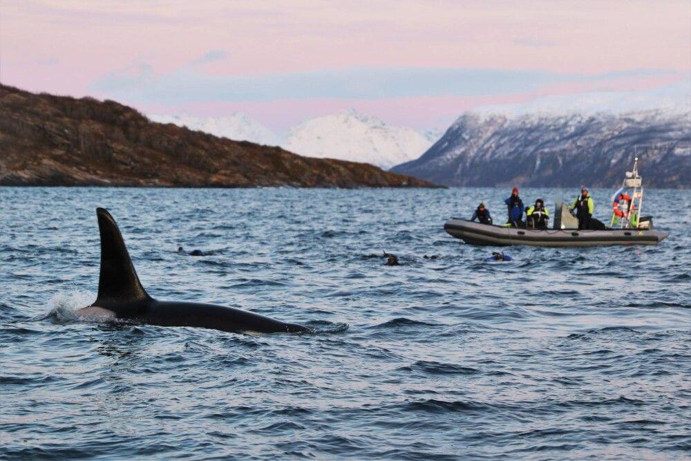 Walbeobachtung vom Boot aus