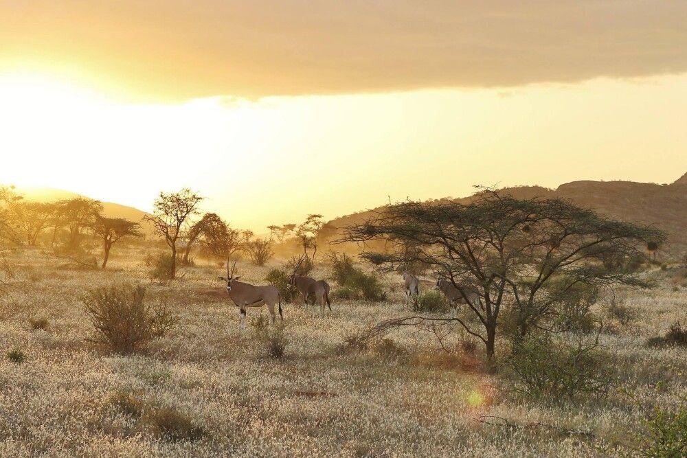 Oryx, Samburu Game Reserve