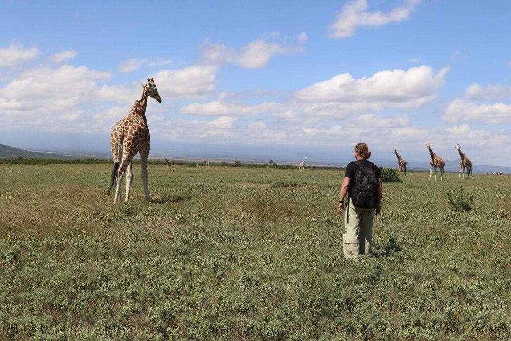Beim Giraffenwandern im Gebiet der Aberdares