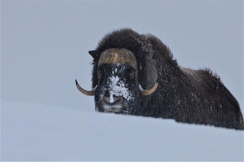 Tier im Schnee