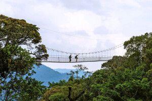 Die Canopy Hängebrücke im Nyungwe Forest