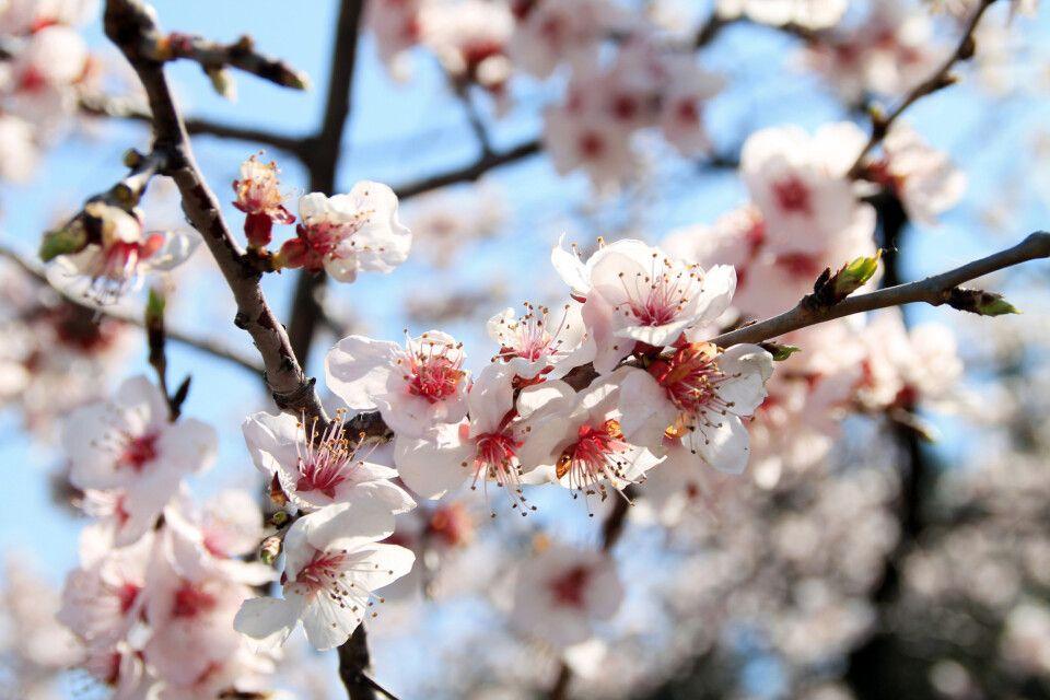 Blütenpracht an der Großen Mauer