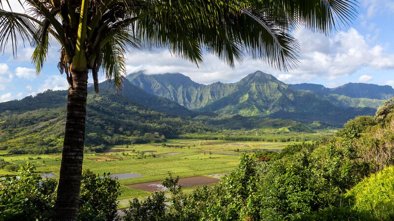 Blick auf das Tal von Hanalei, Kauai © Diamir