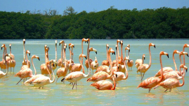 Filigrane Flamingos in Celestun © Diamir