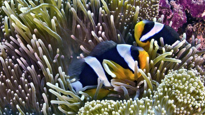 Unterwasserwelt von Raja Ampat © Diamir