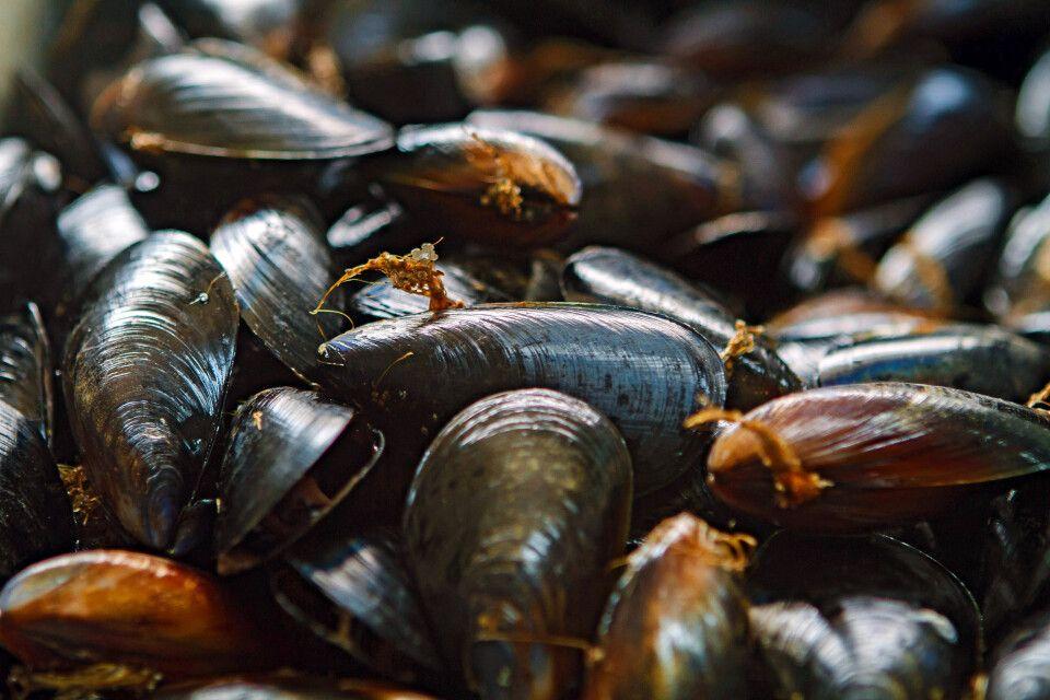 Muscheln auf der Bellarine Halbinsel