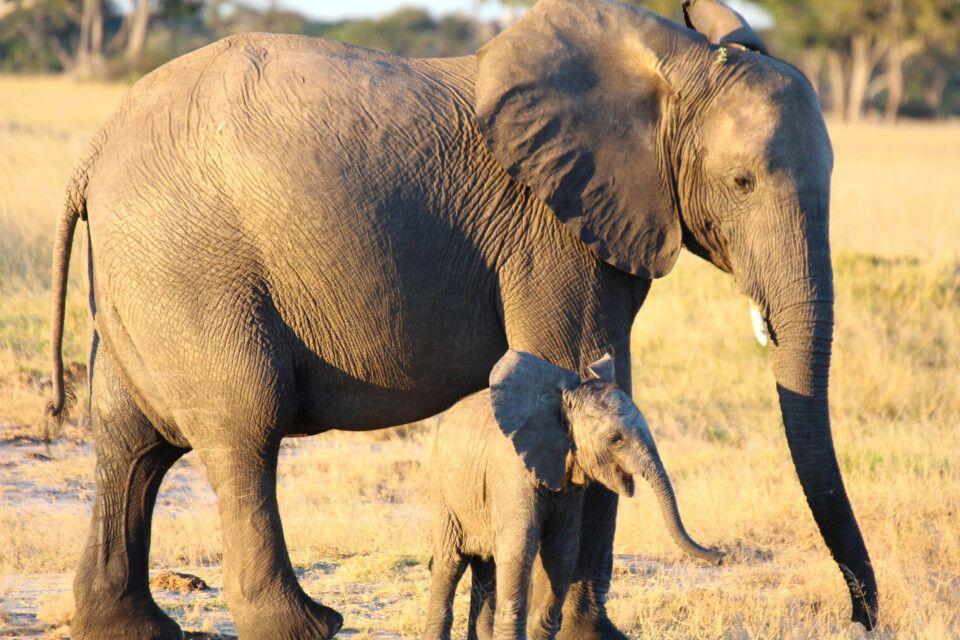 Elefantenmutter mit Kind im Hwange-Nationalpark