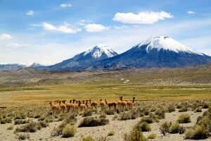 Lauca-Nationalpark