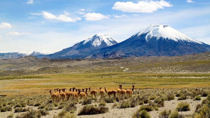 Lauca-Nationalpark © Diamir