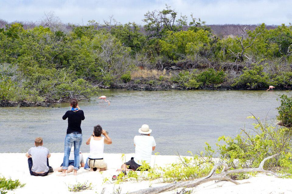 Tierbeobachtung auf den Galapagosinseln