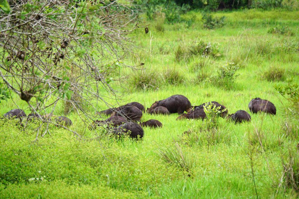 Auf Safari im Pantanal – Wasserscheine en masse