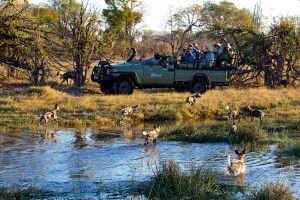 Kwando Camp, Kwara, Wildhunde