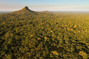 Waldsavanne im Gorongosa-Nationalpark