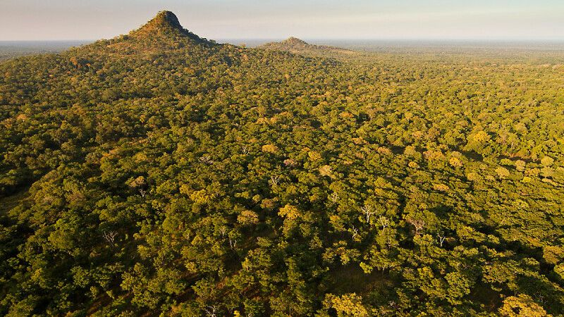 Waldsavanne im Gorongosa-Nationalpark © Diamir