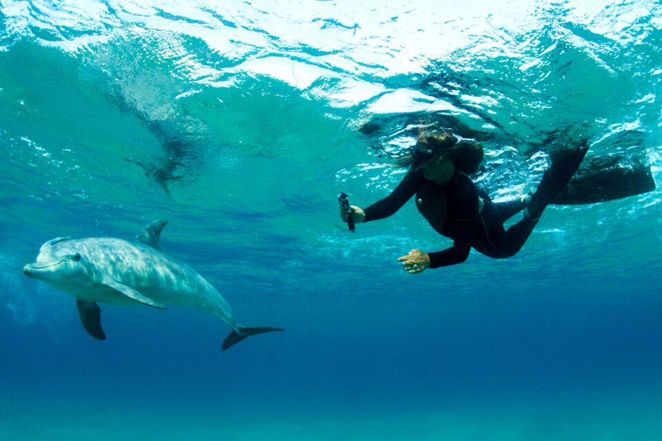 Schnorcheln mit Delfinen vor Ponta do Ouro, Dolphin Encountours